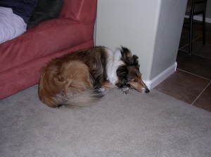 My sweet dog, Maddux was tired after all the excitement of the party. Not sure why, he was kennelled up through it, though