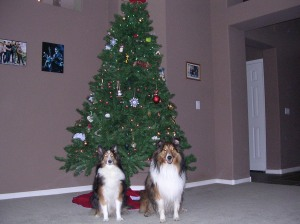 Herky and Maddux posing for a Christmas Photo. How sweet are they?