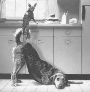 dogs-teamwork