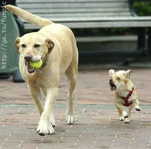 Hey! Gimme my ball back!