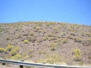 Lake P Cactus