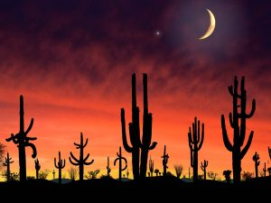 SaguaroNationalParkArizona