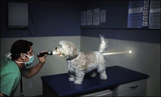 Dog and Flashlight